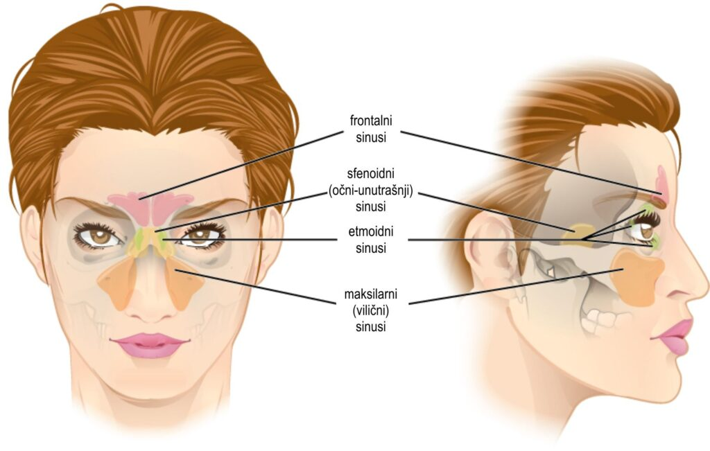Sinusne infekcije: tipovi, simptomi, lečenje